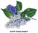 lilla-fiore_~GCO028.jpg
